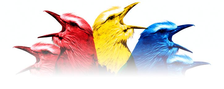 birds_header