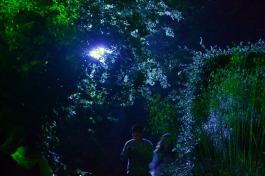 Lurking in Woods - B&S