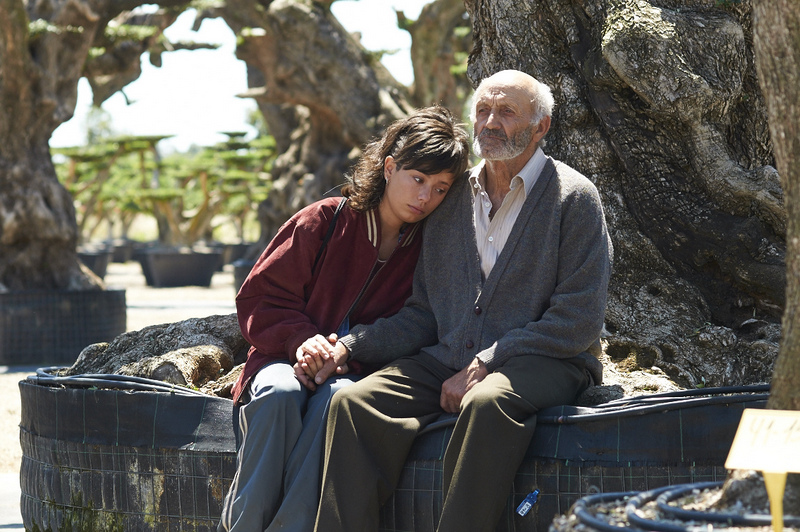 the-olive-tree-007