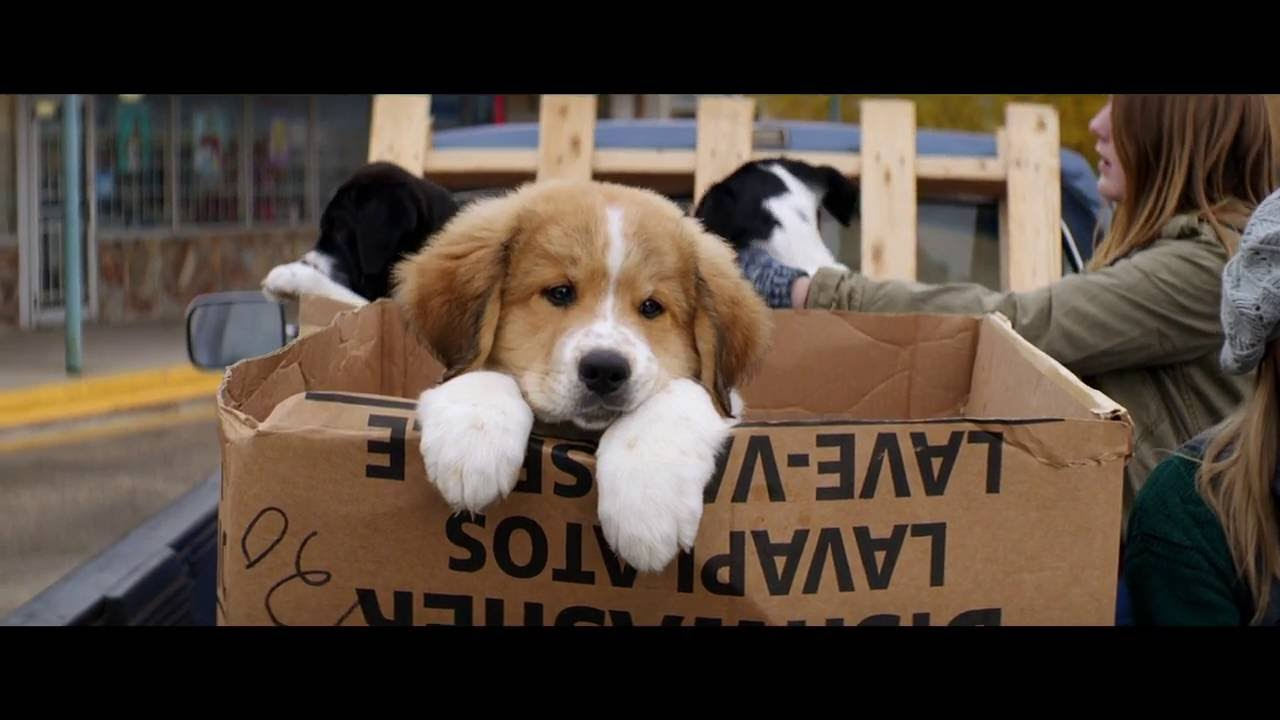 Movie A Dog S Purpose Review